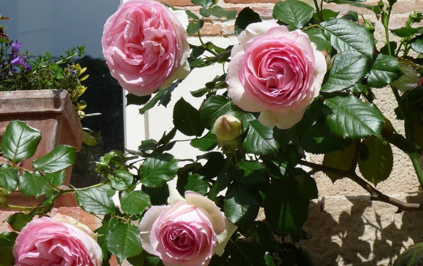 Location de vacances - Gîte à Saint-Jean-Saint-Germain - Les roses du jardin