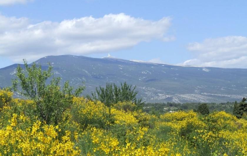 Location de vacances - Gîte à Crillon-le-Brave - Le Mont-Ventoux