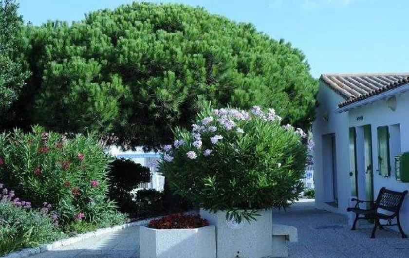 Location de vacances - Maison - Villa à Sainte-Marie-de-Ré - Une partie du jardin face à la réception