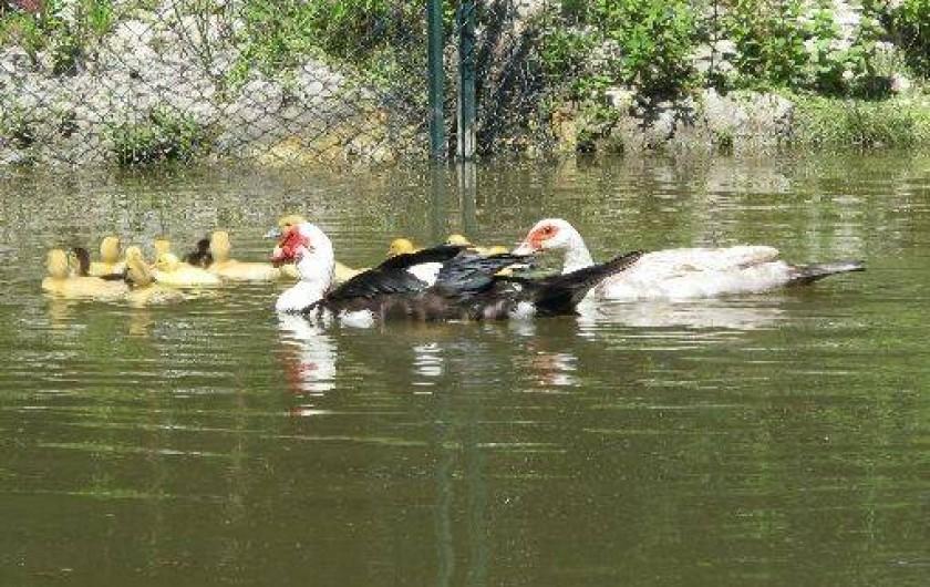 Location de vacances - Chambre d'hôtes à Habas - Deux petits étangs au calme. Canards, poules d'eau, cistudes,