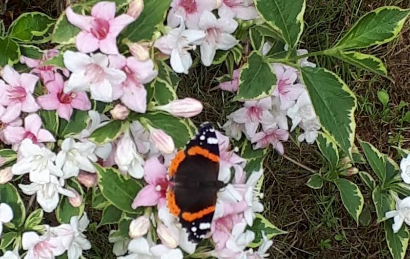 Location de vacances - Chambre d'hôtes à Habas - Nous avons de la chance d'avoir des papillons, des abeilles, vers de terre