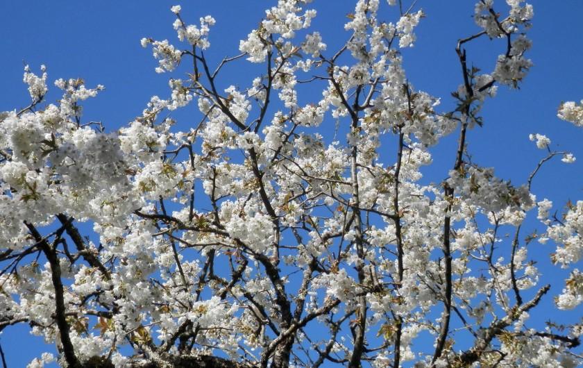 Location de vacances - Chambre d'hôtes à Faycelles - Rêver le ciel du mois de mai...