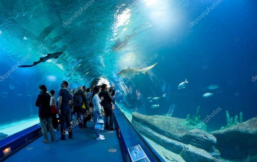 Location de vacances - Appartement à Valence - le tunnel sous les requins