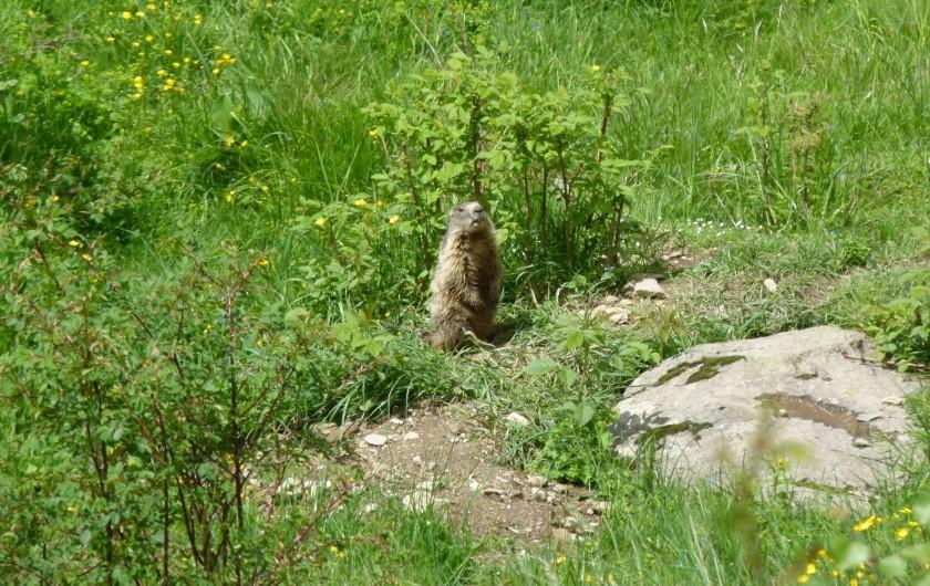Location de vacances - Appartement à Saint-Lary-Soulan - marmotte à Piau  Engaly