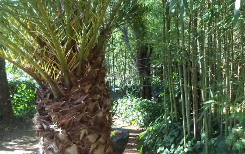 Location de vacances - Villa à Mandelieu-la-Napoule - une autre partie du jardin
