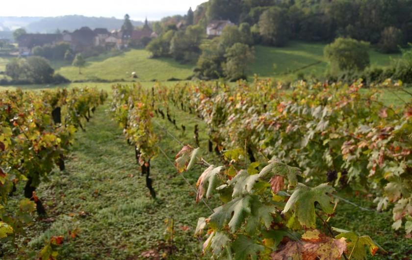 Location de vacances - Chambre d'hôtes à Pupillin - les vignes avec belvédère