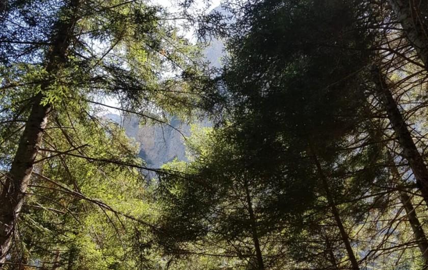 Location de vacances - Appartement à La Joue du Loup - Superbe nature, soleil entre les arbres à la Joue du Loup le soir