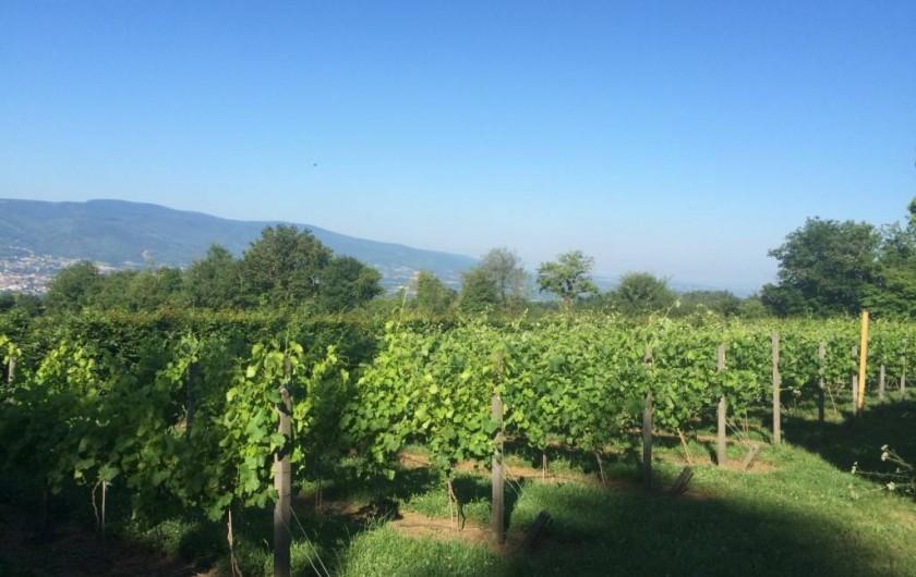 Location de vacances - Chambre d'hôtes à Pont-de-Larn - La vigne