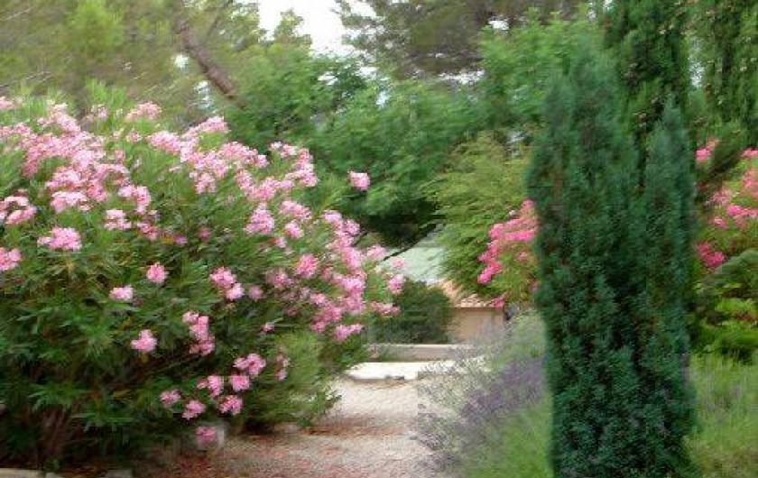 Location de vacances - Appartement à Éguilles - Des fleurs, des arbres un cadre qui vous enchantera.