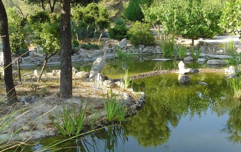 Location de vacances - Appartement à Éguilles - étang avec carpes koïs, poissons rouge, et grenouille
