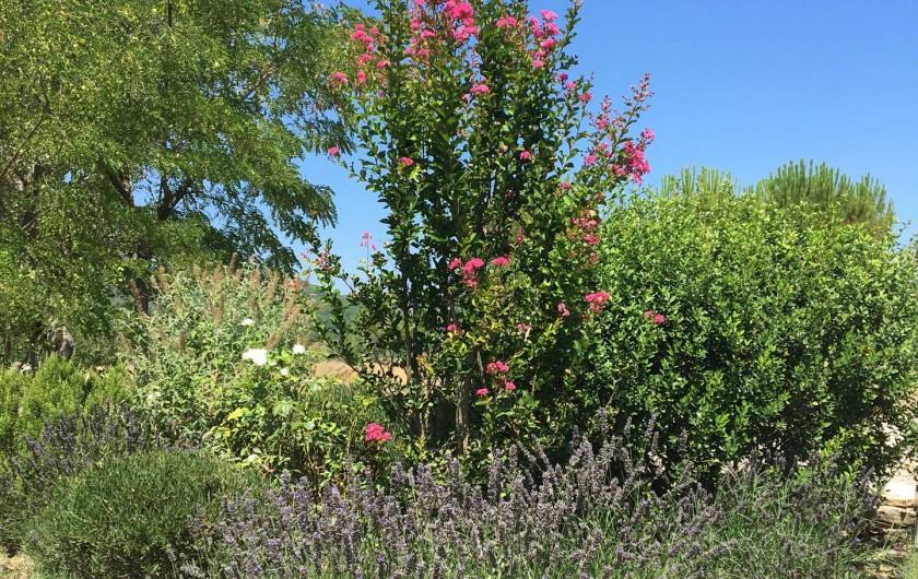 Location de vacances - Mas à Céreste - Jardin paysager