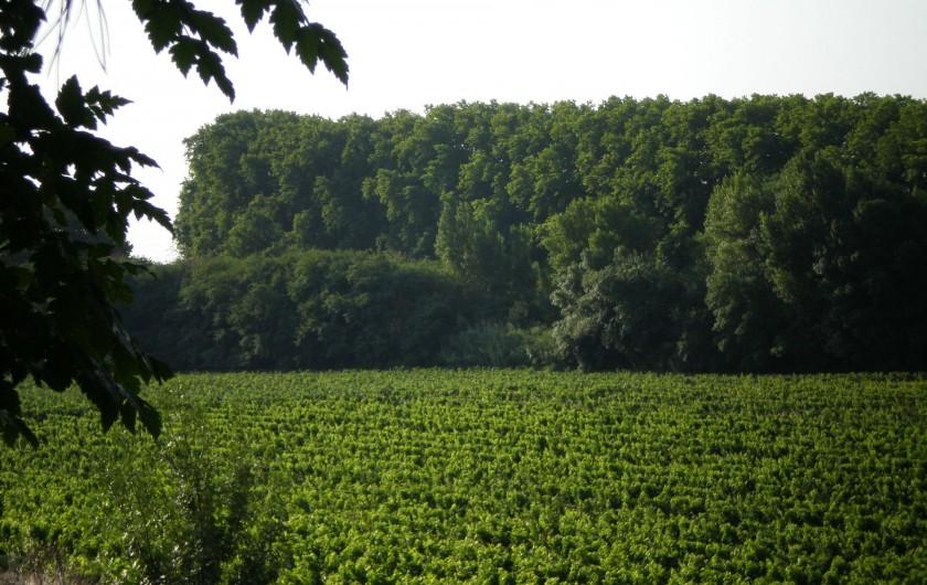 Location de vacances - Gîte à Mirepeisset - Vignoble