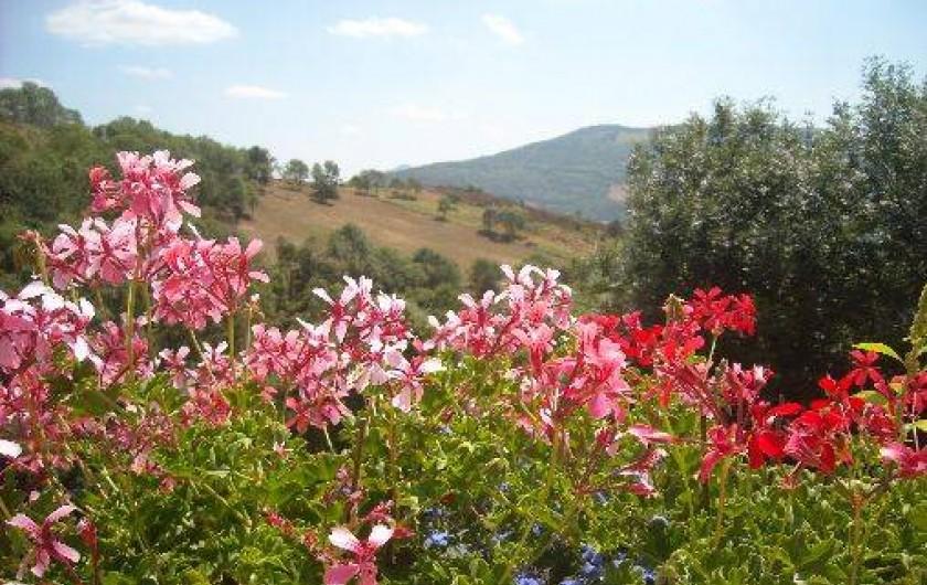 Location de vacances - Gîte à Prats-de-Mollo-la-Preste - Des fleurs partout.