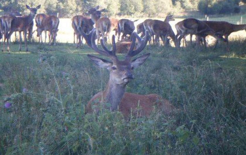 Location de vacances - Cabane dans les arbres à Paulhac-en-Margeride - Kiki et ses biches