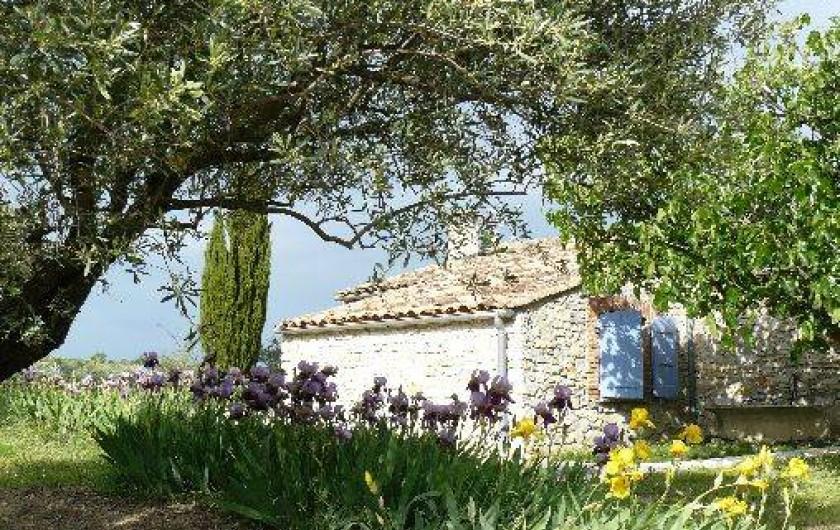Location de vacances - Gîte à Saint-Jean-de-Serres - A l'ombre de l'olivier, vu sur la ch1 côté Sud-est
