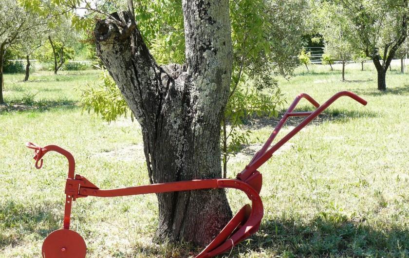 Location de vacances - Gîte à Saint-Jean-de-Serres - La charrue se repose contre le vieux  amandier