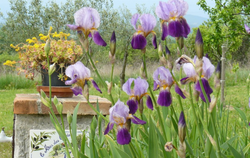 Location de vacances - Gîte à Saint-Jean-de-Serres - Fontaine fleurie