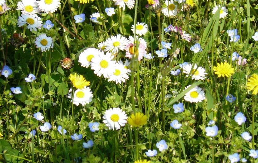 Location de vacances - Gîte à Saint-Jean-de-Serres - fleurs du terrain Avril,Mai