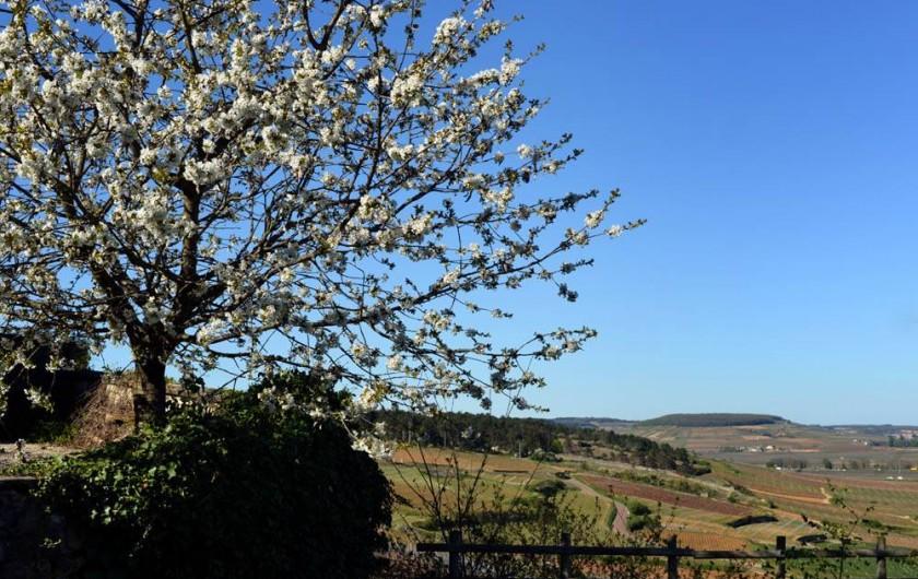Location de vacances - Chambre d'hôtes à Beaune - Vue sur la colline de Corton