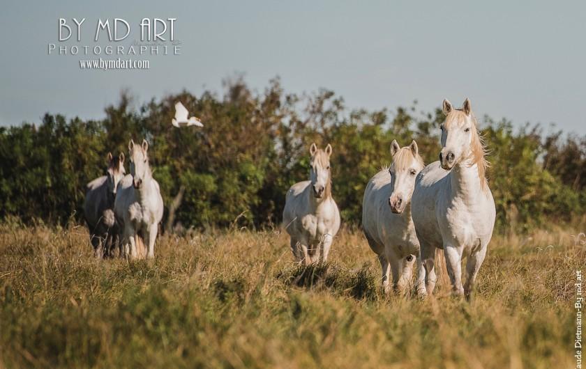 Location de vacances - Gîte à Arles - Nos chevaux