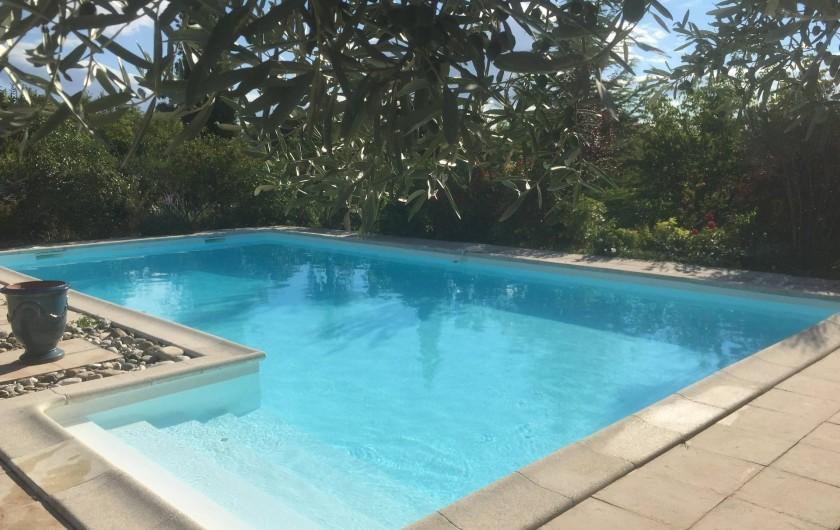 Location de vacances - Villa à Alès - La piscine et ses oliviers