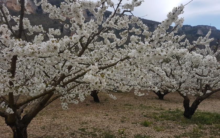 Location de vacances - Gîte à La Cresse - Le temps des cerisiers en fleurs