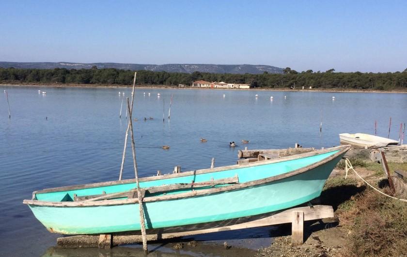 Location de vacances - Villa à Frontignan - Flamands roses et oiseaux de toutes sortes se partagent l'étang d'Ingril
