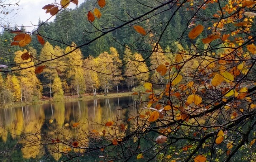 Location de vacances - Gîte à Raon-lès-Leau - Automne au lac de la Maix