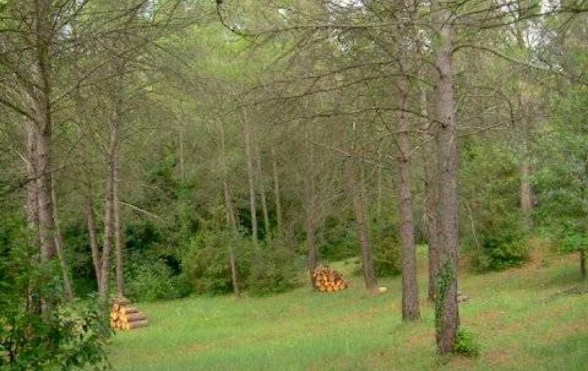 Location de vacances - Villa à Puget - Vue sur la zone arborèe autour de la maison