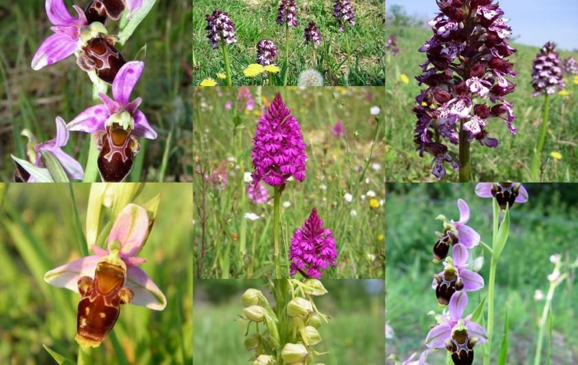 Location de vacances - Gîte à Lamaguère - Le paradis des d'orchidées sauvages