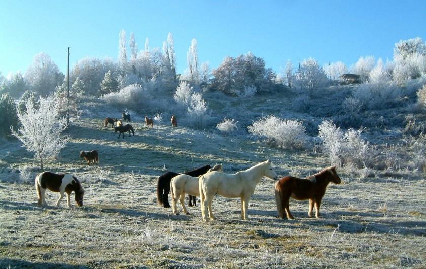 Location de vacances - Gîte à Lamaguère - La magie de l'hiver en liberté!