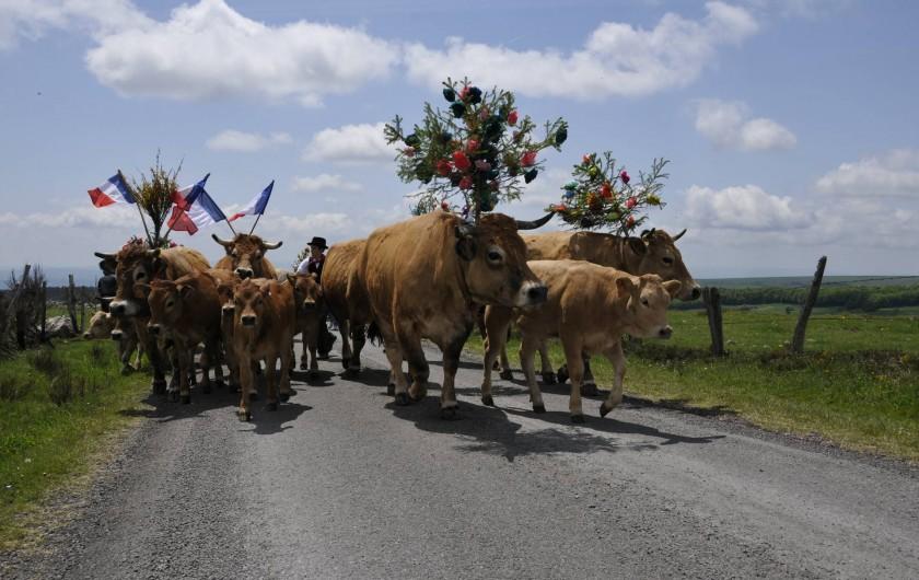 Location de vacances - Gîte à Saint-Pierre-de-Nogaret - Jour de transhumance pour nos vaches