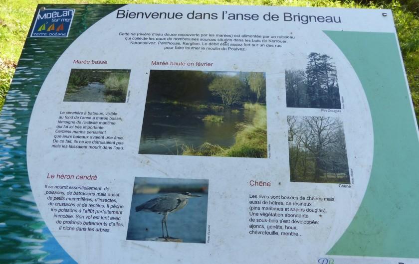 Location de vacances - Maison - Villa à Kermeurzac'h - La faune et la flore expliquée