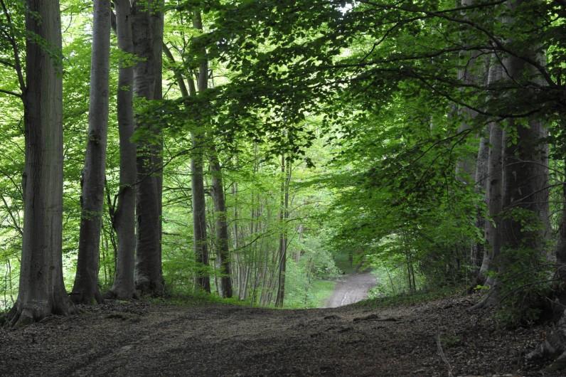 Location de vacances - Cabane dans les arbres à Saint-Germain-des-Essourts - Sous-bois en été