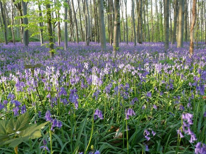 Location de vacances - Cabane dans les arbres à Saint-Germain-des-Essourts - Sous-bois au printemps