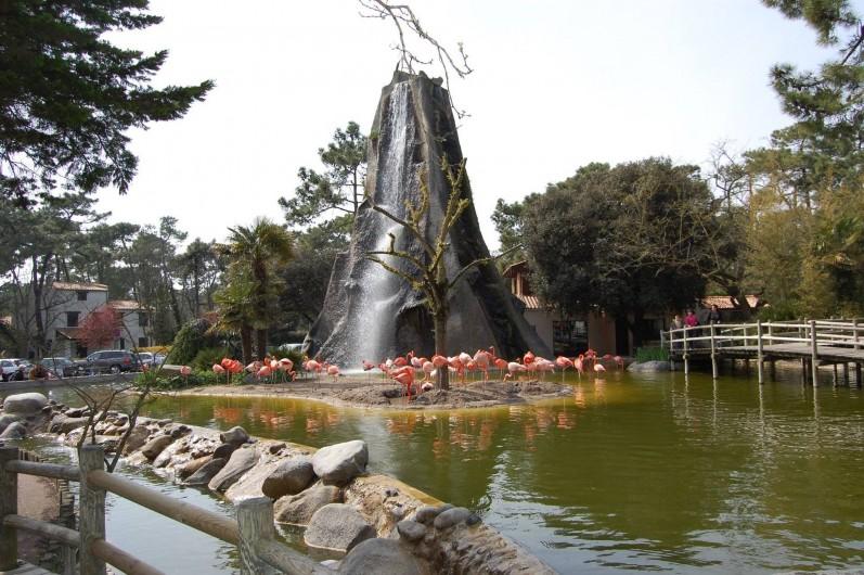 Location de vacances - Bungalow - Mobilhome à Les Mathes - Zoo de la Plamyre