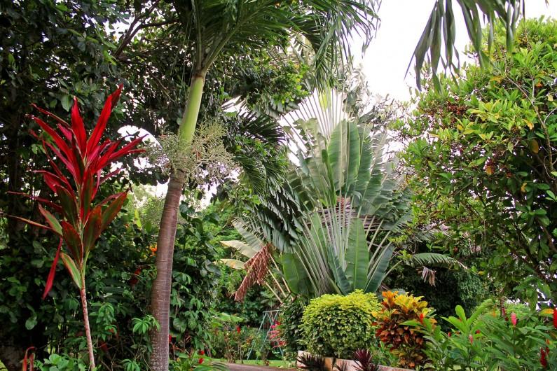 Location de vacances - Villa à Lamentin - jardin tropical