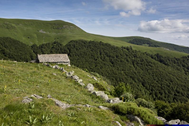 Location de vacances - Insolite à Saint-Jacques-des-Blats - L'approche du buron et sur les hauts plateaux : le GR400