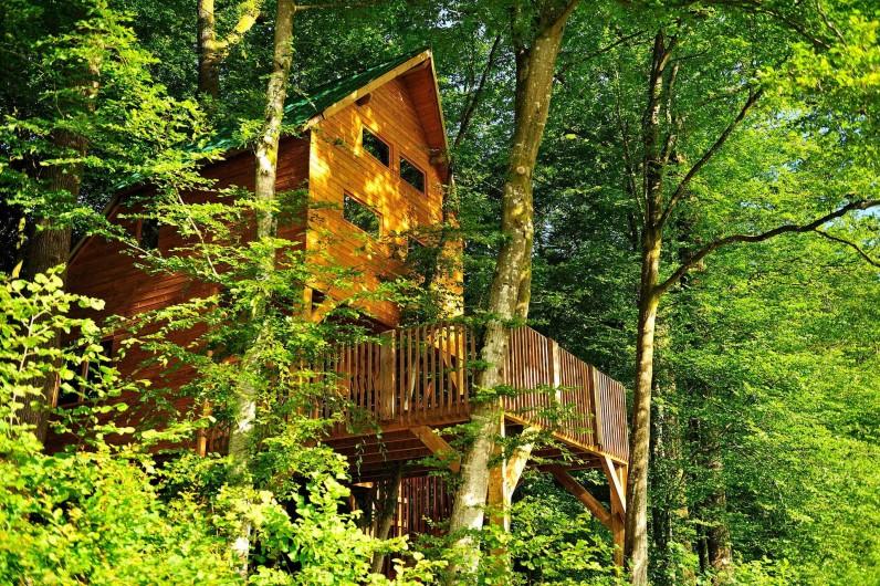Location de vacances - Cabane dans les arbres à Signy-l'Abbaye - La ruche, traversée à l'intérieur par 2 arbres dont un vieux chêne