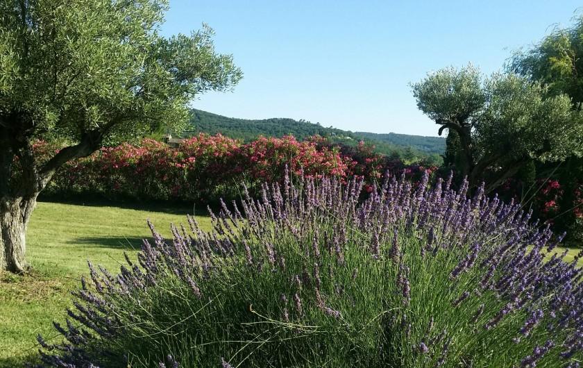 Location de vacances - Villa à Saint-Gély - Lavandes, oliviers, lauriers et arbres fruitiers bios (mirabelles, figuier, pomm
