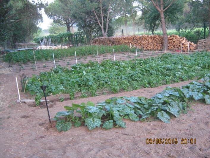 Location de vacances - Gîte à Vidauban - Les légumes du potager