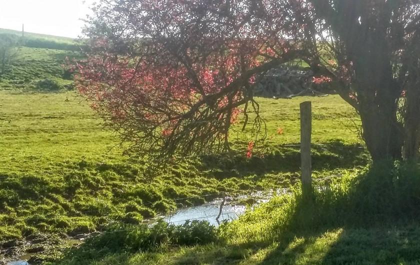 Location de vacances - Chambre d'hôtes à Landes-le-Gaulois - Balade bucolique dans le petit verger qui longe le pré aux animaux.
