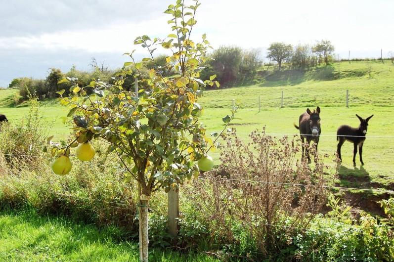 Location de vacances - Chambre d'hôtes à Landes-le-Gaulois - Nos ânes das leur pré