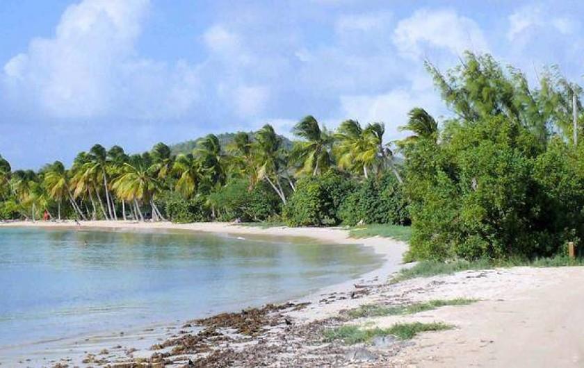Location de vacances - Studio à Sainte-Anne - Plage des salines                         Saint-Anne       MARTINIQUE