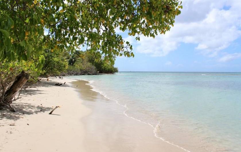 Location de vacances - Studio à Sainte-Anne - Plage de l'Anse Caritan Saint-Anne MARTINIQUE