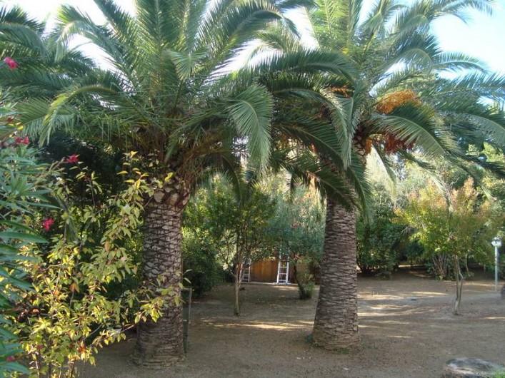 Location de vacances - Villa à Saint-Florent - jardin