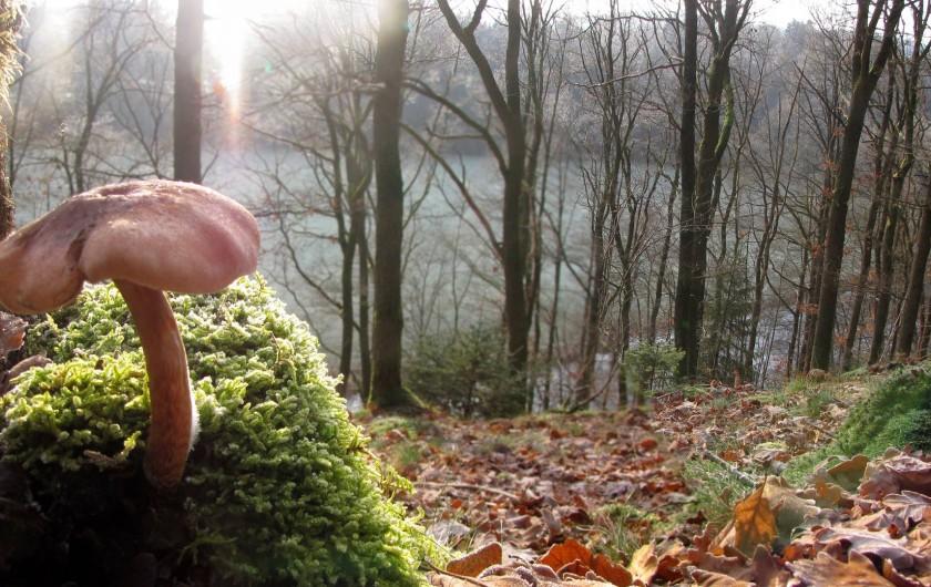Location de vacances - Gîte à Malmedy - De belles balades en perspective, dans les bois...
