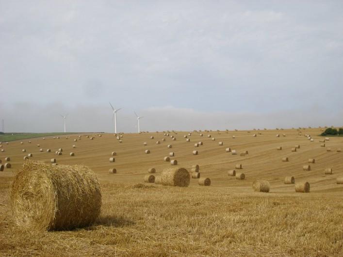 Location de vacances - Gîte à Widehem - Balles de paille après la moisson,  autour du village de Widehem