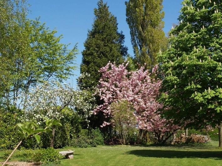 Location de vacances - Chambre d'hôtes à Bois-Guilbert - côté est du parc avec un prunus en fleurs
