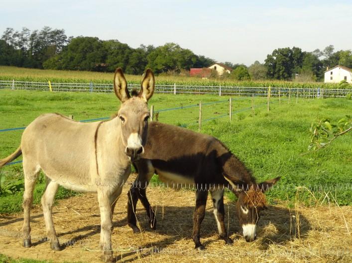 Location de vacances - Appartement à Pouillon - Les ânes.